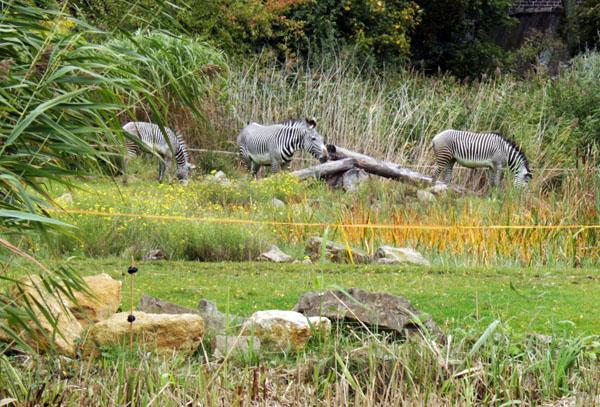 Zooschaufenster Leipzig