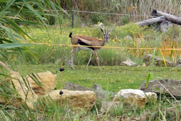 zooschaufenster im leipziger rosental