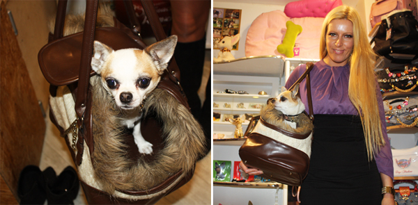 Chihuahua Dogshop Leipzig