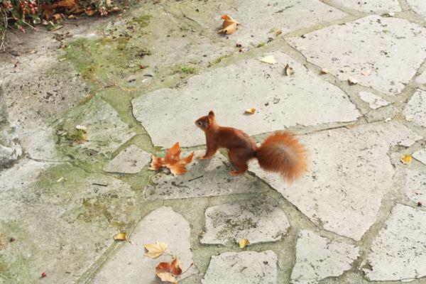 eichhörnchen im clara-zetkin-park leipzig