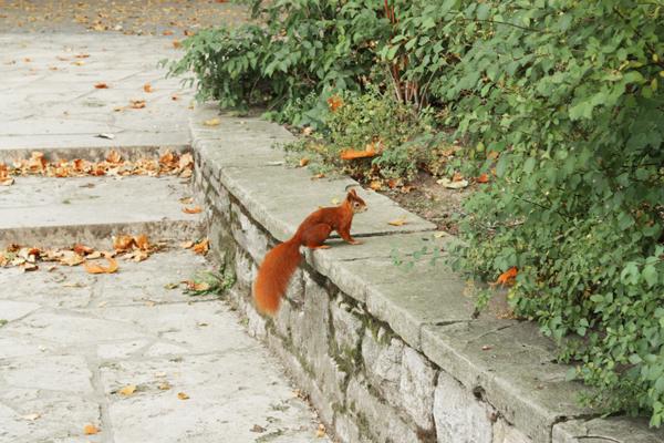eichhörnchen im clara-zetkin-park