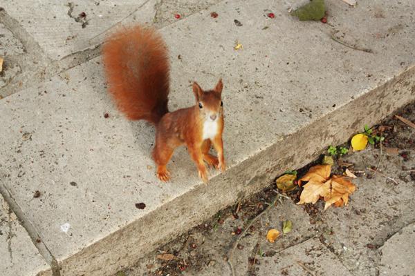 clara-zetkin-park leipzig eichhörnchen
