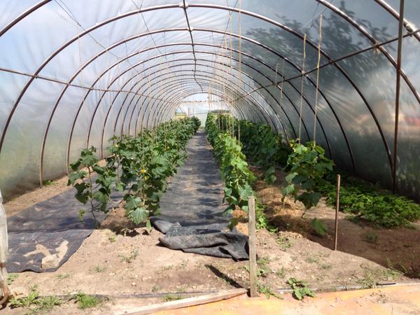 Lobacher Hof Landwirtschaft