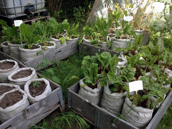 stadtgarten annalinde leipzig urban gardening. Black Bedroom Furniture Sets. Home Design Ideas