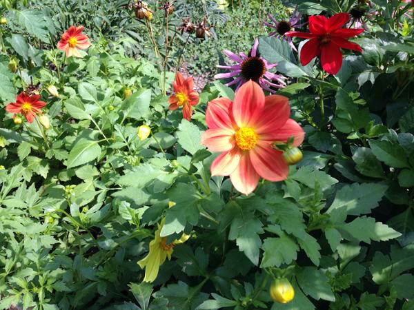 Stadtgarten Connewitz Blumen
