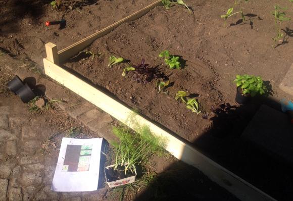 Gemüse selbst anbauen Leipzig ernte mich
