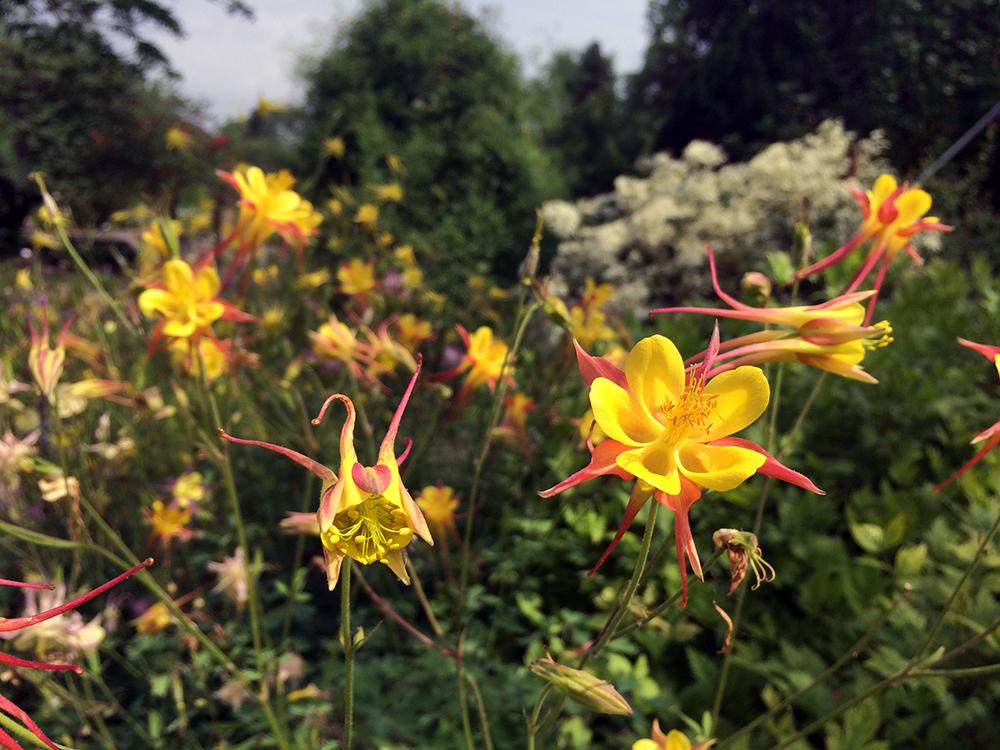 Botanischer Garten Blüten