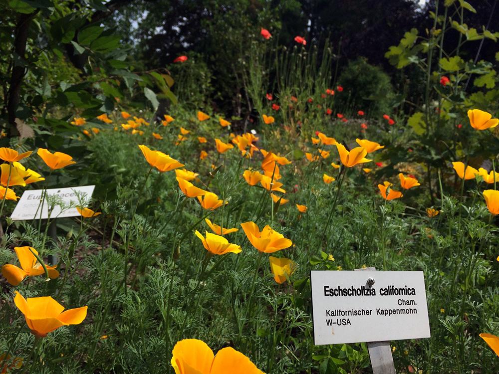 Botanischer Garten Blumen