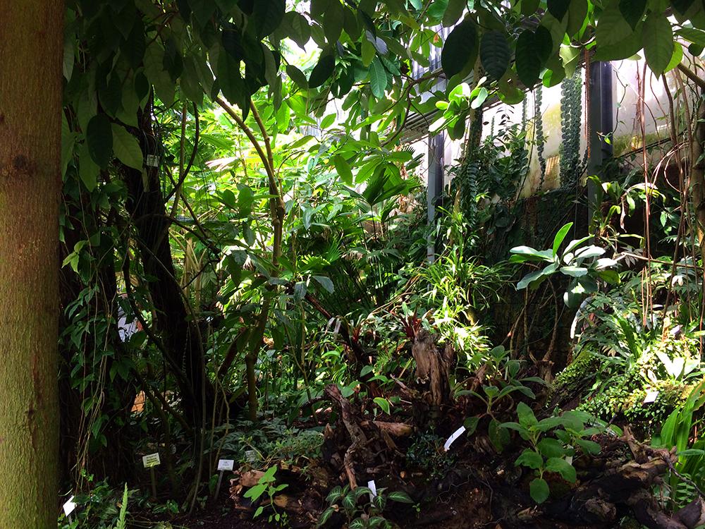 botanischer garten gewächshäuser