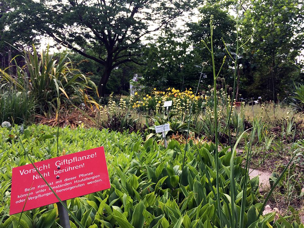 botanischer garten giftpflanzen