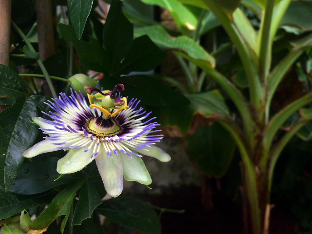 botanischer garten schmetterlingshaus