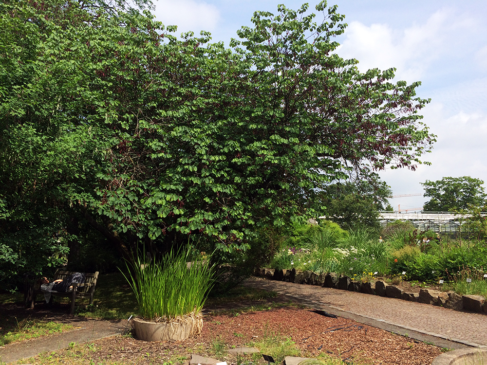 botanischergarten in leipzig