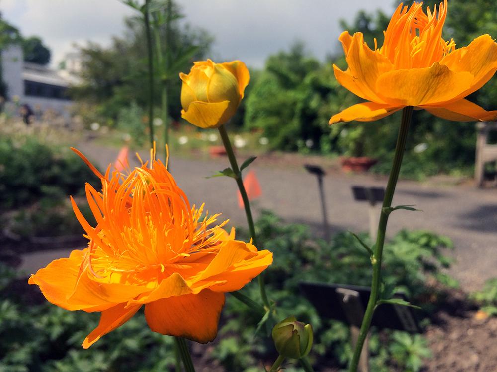 botanischergarten leipzig