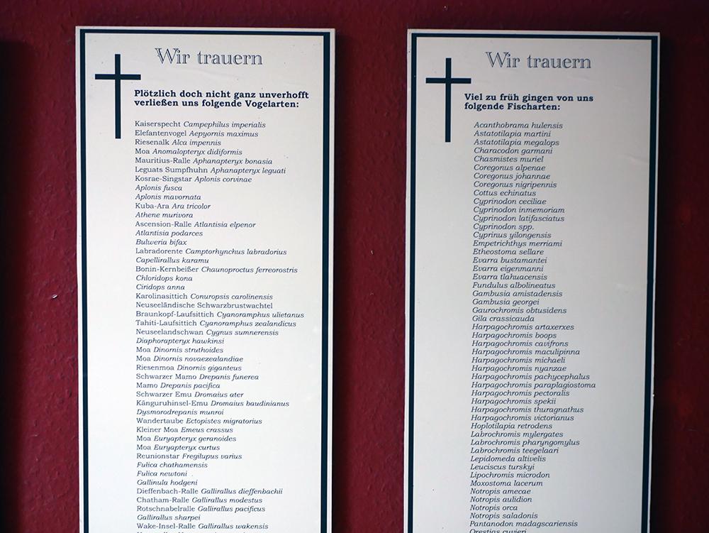 Phyllodrom Gedenktafeln