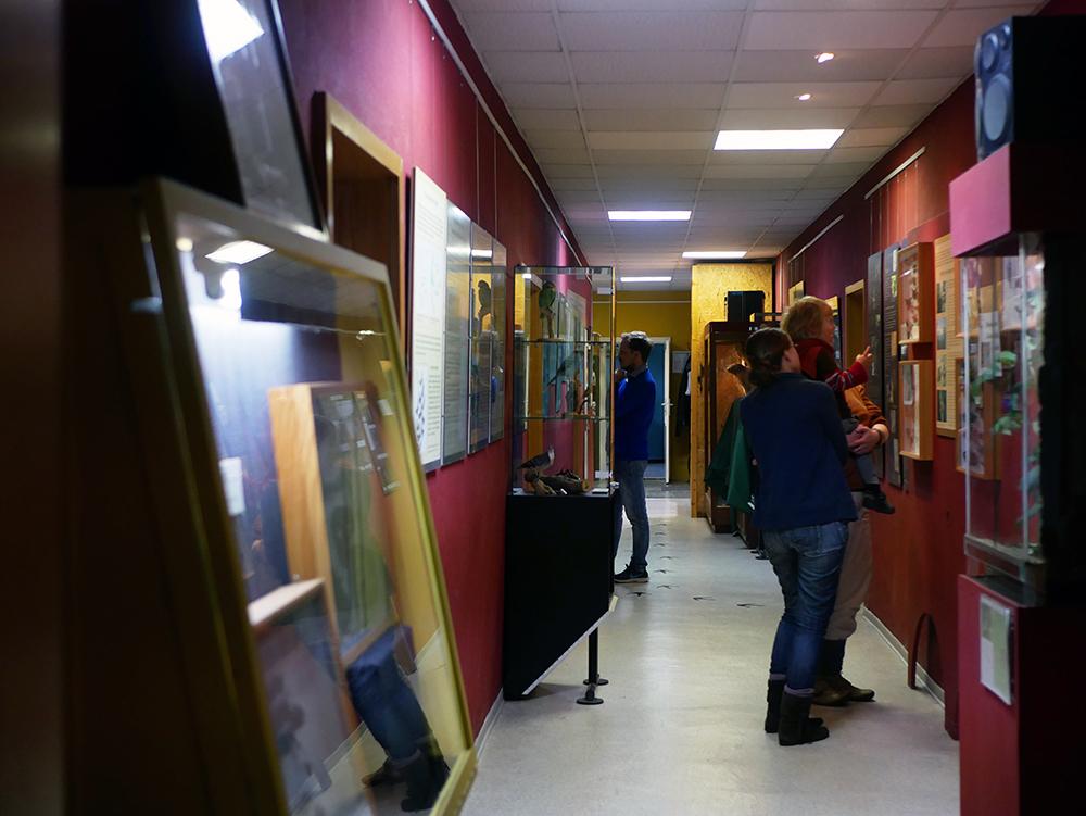 phyllodrom museum