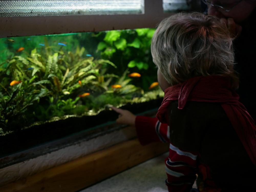 Regenwaldmuseum Fische