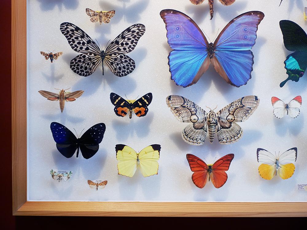 Schmetterlinge Phyllodrom