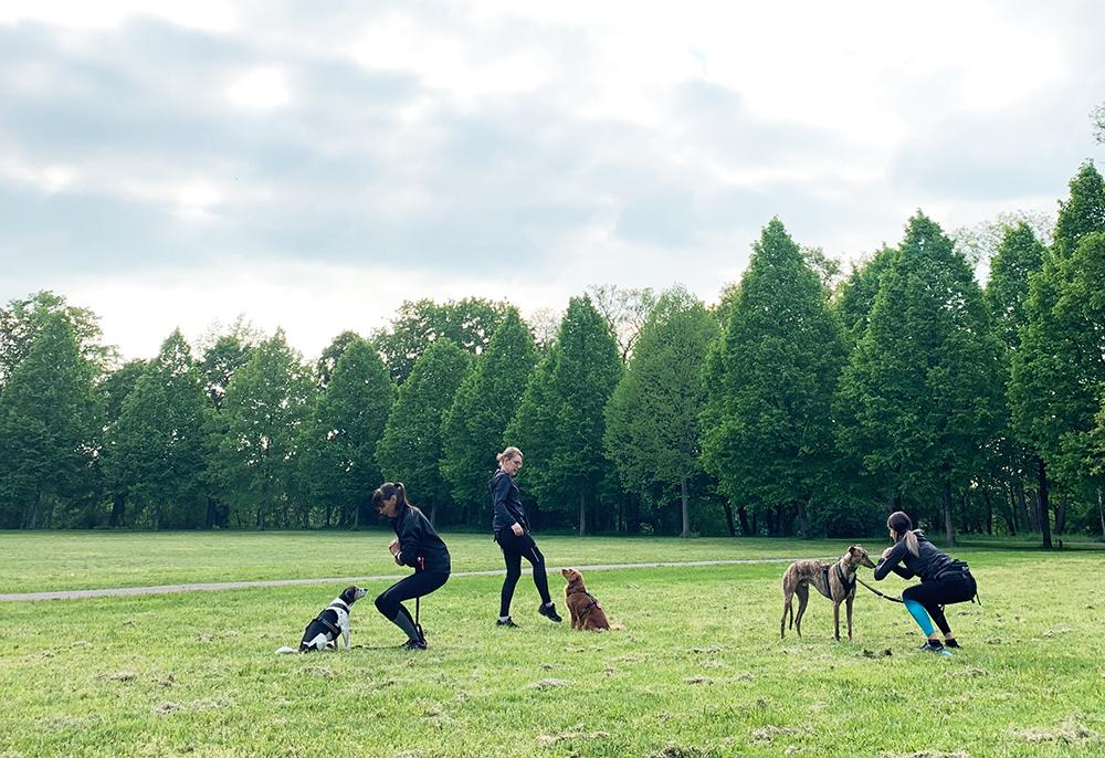 fitness mit hund