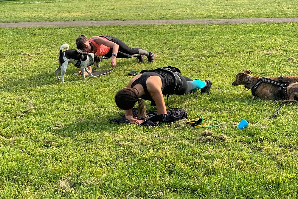 fitnesskurse mit hund